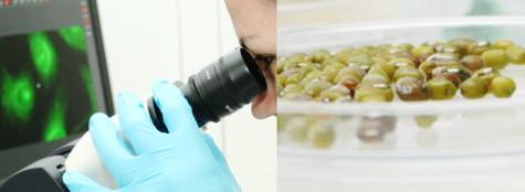 Departamento de Biotecnología y Ciencia de los Alimentos