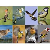 Identificación y características de las Aves más comunes de nuestro entorno