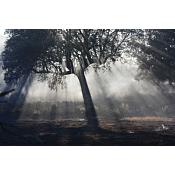 arbol transparente - UBUVERDE