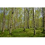 bosque ubuverde junio