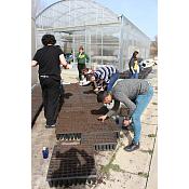 Plantación semillas de bellotas