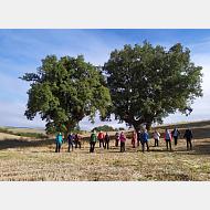Excursión ambiental Paseo de los Romanos (26-9-2020) Foto de grupo junto a unos árboles