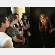 Recorrido por el Museo de la Evolución Humana